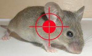 cách diệt chuột phòng trọ