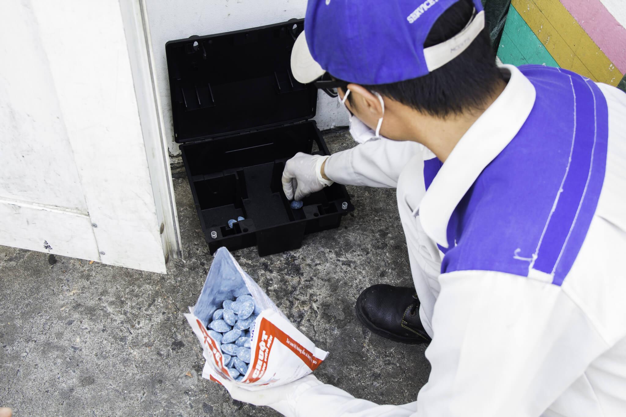Dịch vụ diệt chuột tại nhà hiệu quả và an toàn nhất