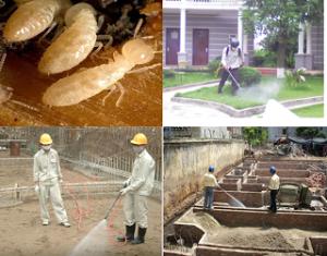 Diệ côn trùng an toàn hiệu quả
