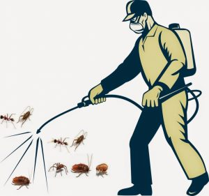 diệt côn trùng hiệu quả an toàn