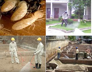 Diệt mối cho công trình xây dựng hiệu quả – an toàn – giá rẻ