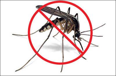 Cách đuổi muỗi hiệu quả nhất trong những ngày nồm ẩm