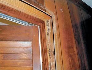 Tác hại của mối với đồ gỗ nhà bạn